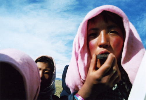 Pink_tibet