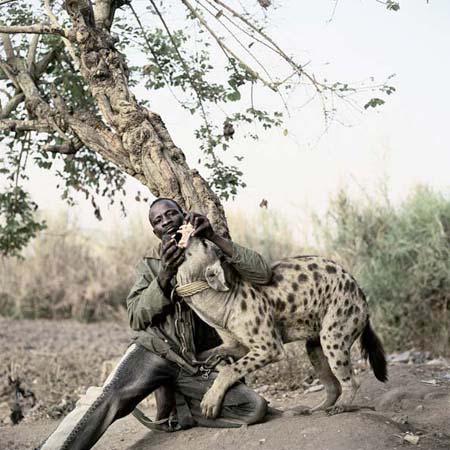 Hyena6