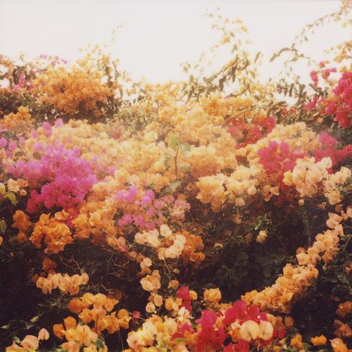 Tumblr_kzf9skIhPB1qzr6ooo1_500