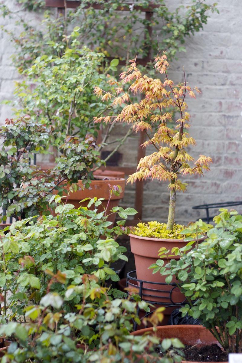 Garden 20122