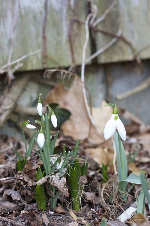 February_LittleHouse01