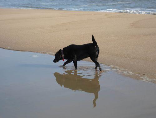 WhatPossessedMe_blackdog